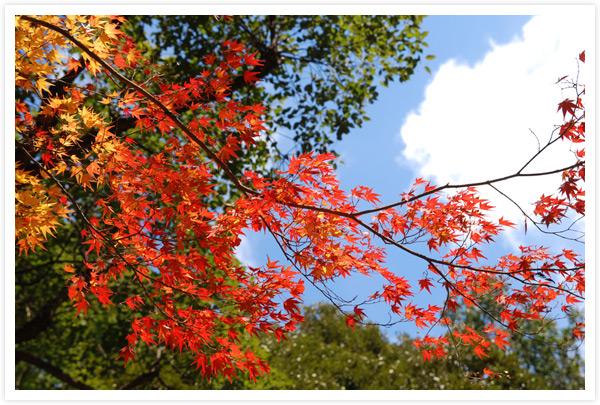 上賀茂神社庁ノ舎脇の紅葉