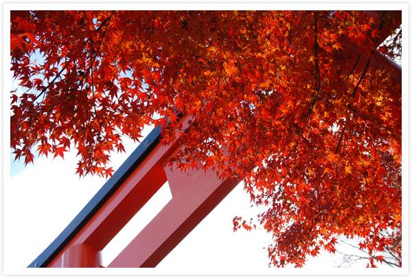 下鴨神社鳥居と紅葉