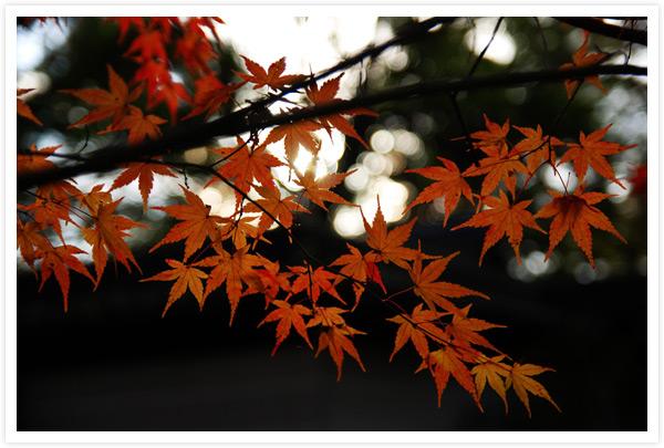 糾ノ森の紅葉