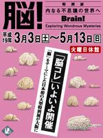 大阪歴史博物館 特別展「脳!-内なる不思議の世界へ」